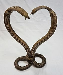 Kissing Cobras - Taxidermy