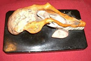 Plaster Model Of The Tongue