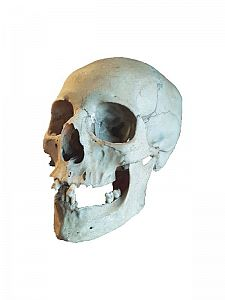 Medical Teaching Skull