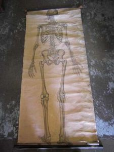 Full Size Skeleton Chart c1900