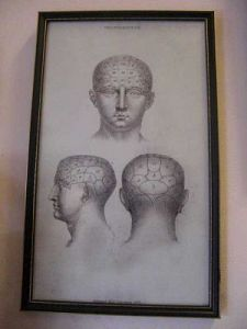 Phrenology Print framed c 1890.