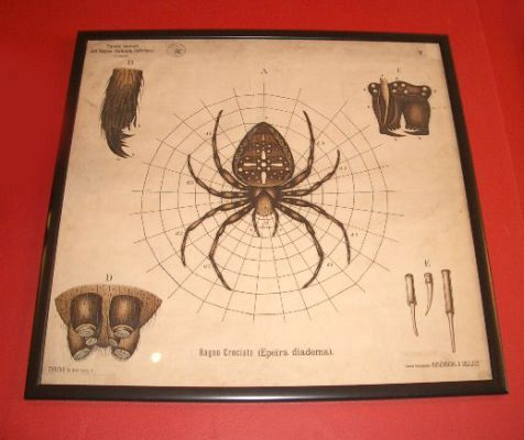 Framed spider chart