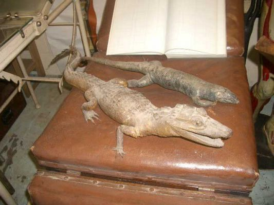 Stuffed crocodile and lizard