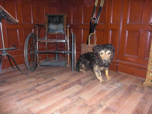 Consulting Room with Wheelchair and Dog